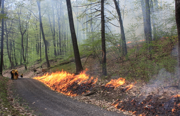 Controlled burn, photo courtesy of the Nature Conservancy, via www.gunksfireplan.org