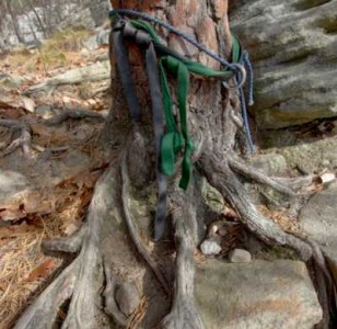 The eroded and stressed tree atop the rock climb,