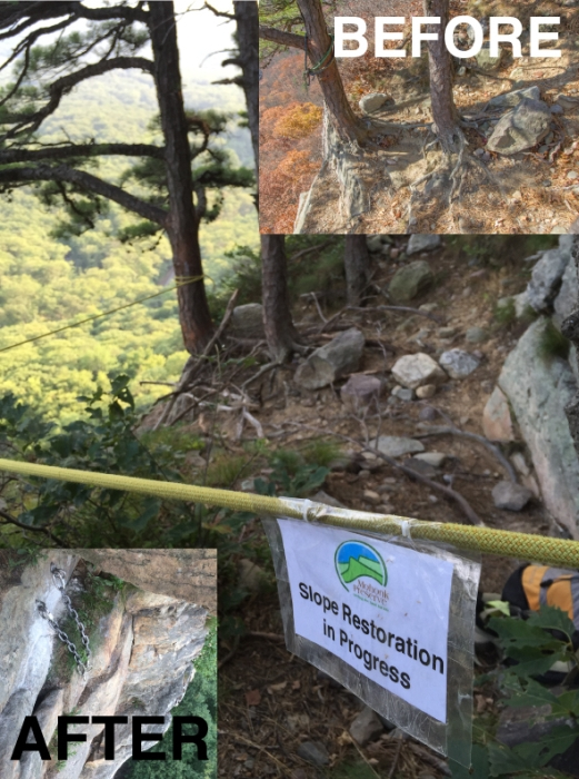 The climb Baby, which was exhibiting erosion, was roped off and new bolted anchors were placed below the damaged tree. Photo: Gunks Climbers' Coalition