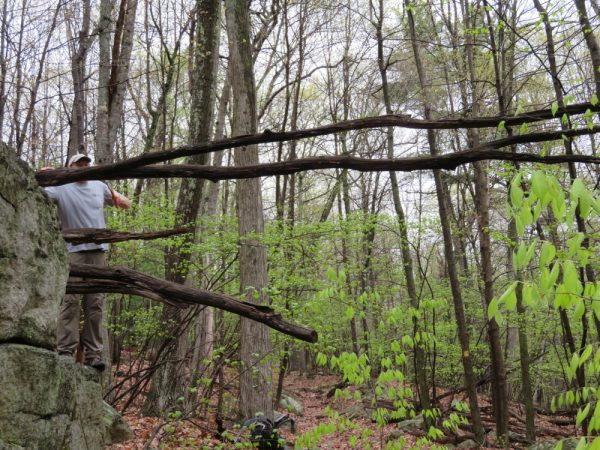 Matt saws off the overhanging part of a dead tree over the trail at the GCC adopt-a-crag day in Lost City, May 2018.