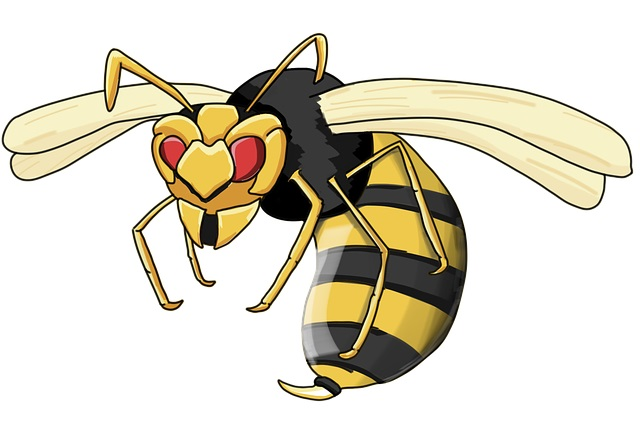 Wasp illustration (public domain)