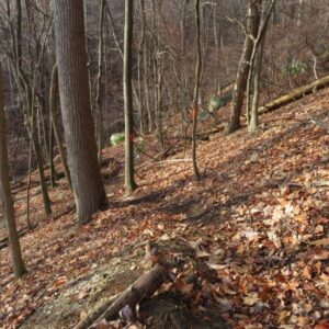 Part of the new trail to the Antlion cliff at the Gunks.