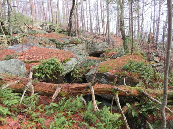 Vegetated talus enroute to the Antlion cliff in the Gunks.