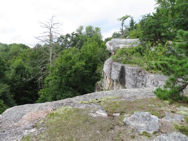 Dead hemlock trees along the Gunks cliff