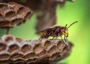 Wasp on nest.